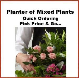 Planter of Mix Plants - Price Pick & Go!